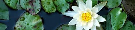 Wilmington Nc Botanical Gardens by North Carolina Botanical Garden Education And Events