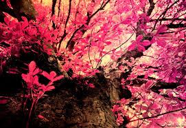 pink camo wallpaper vidur net pink camo wallpapers for phone wallpaperpulse pink camo wallpaper