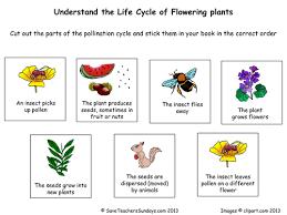 life cycle of flowering plants worksheet pdf growth cycle