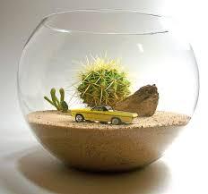 best 25 cactus terrarium ideas on pinterest plants for