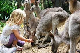 top 10 animal encounters in queensland brisbane