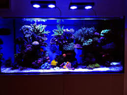 led reef lighting reviews evergrow led aquarium article digest