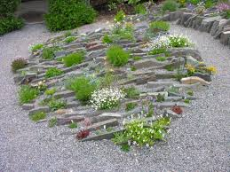 Rock Garden Society Greetings From Newfoundland Forum Topic American Rock