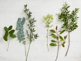 All Types Of Flowers List - best 25 types of flowers ideas on pinterest peony popular