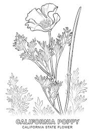 california flower coloring free printable coloring pages