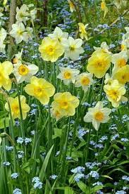 Spring Flower Pictures Expert Gardening Tips To Get The Most Out Of Yours For Spring
