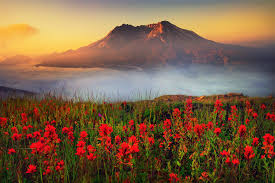volcano flowers sunsets fog beautiful state washington mount helens volcano