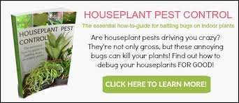 where do houseplant pests come from