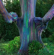 91 best unique trees images on nature plants