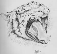 pictures images of sketches of animals drawing art gallery
