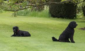 dog friendly landscaping around fences dog friendly landscaping