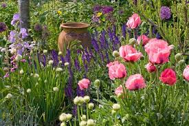 a stunning perennial planting idea with poppies irises
