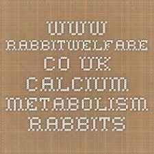 Kims Rabbit Hutch Kim U0027s Rabbit Hutch Rabbit Pinterest Rabbit Tim O U0027brien And
