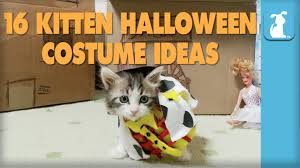 Pet Cat Halloween Costumes 16 Kitten Halloween Costume Ideas Kitten Love Youtube