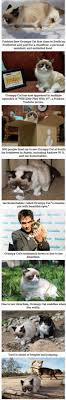 Grumpy Cat Has Died Youtube - 3770 best my grumpy cat pics images on pinterest grumpy cat