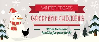 backyard chickens healthy treats for the winter months pajamas