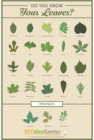 herb leaf identification chart theleaf co