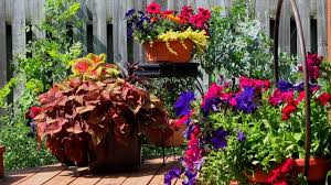 right plants and right container for container planting