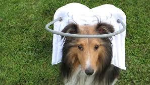 Dog Blinds Blind Dog Halo Guide For Blind Dogs Blind Dog Bumper