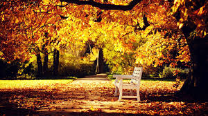 100 autumn wallpaper hd download free fall tag wallpapers