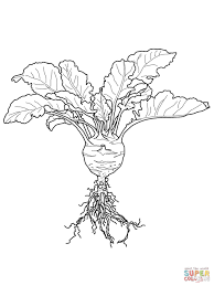kohlrabi coloring page free printable coloring pages