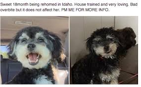 meetups near boise idaho meetup adoption opportunity for house trained and very loving small dog