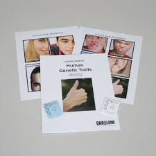 carolina biokits human genetic traits carolina com