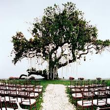 outside weddings garden wedding ideas wedding trees wedding and weddings