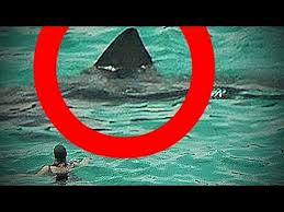 biggest megalodon shark real megalodon shark sightings caught on camera biggest sharks in