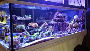 marine safe tank ornaments decor reef2reef saltwater and reef
