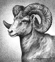 best 25 ram tattoo ideas on pinterest aries ram tattoo aries
