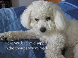 Disappointed Dog Meme - i love you but i m disappointed image macros