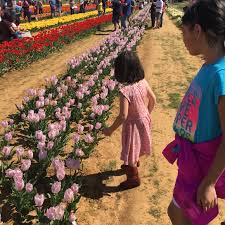 park place lexus grapevine service coupons spring fun with pick your own tulips in texas dallas single mom