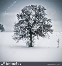plants snowy tree stock image i3151160 at featurepics