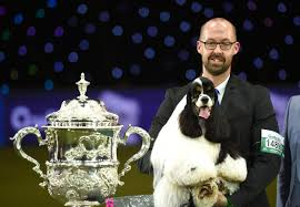 boxer dog crufts 2014 crufts best in show winner branded u0027a joke u0027 as dog lovers say