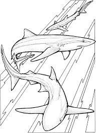 sharks coloring7 com