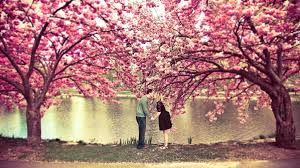 apple tree bloom wallpapers beutiful tag wallpapers spring flowery apple tree bloom pink