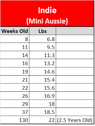 australian shepherd how much raising a mini aussie growth stats