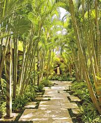 backyard bamboo landscape tropical with hawaiian lights