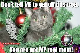 Christmas Memes Funny - funny cat in christmas tree funny cat christmas meme