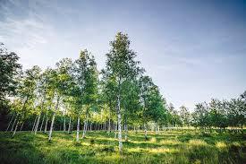 trees hashtag on