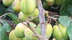 different types of damages that fruit trees are facing its best