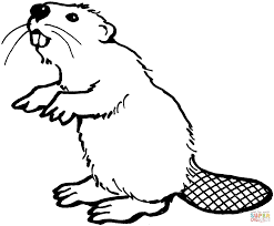 american beaver coloring page free printable coloring pages