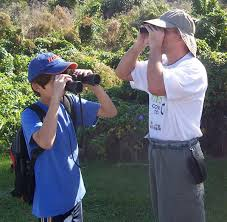 birdwatching wikipedia