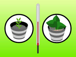House Plants Diseases - how to grow houseplants in water hydroculture 7 steps