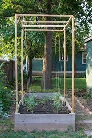 pardon the noob tomato trellis