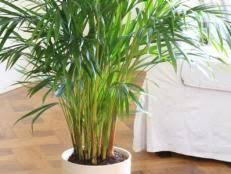 good houseplants for low light indoor plants low light hgtv