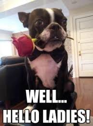 Boston Terrier Meme - 20 funniest looking boston terriers playbuzz