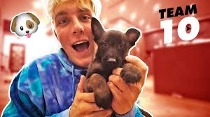 tesla jake paul inside video i actually bought a puppy not clickbait