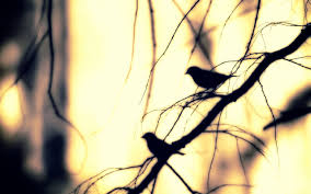 Wallpaper With Birds Tree Branches Wallpapers Wallpaper Cave